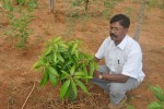Chandrashekhar, a role model organic farmer