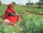 Phool Bai growing vegetables organically