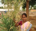 Revathi with her fodder crops grown in the back yard