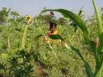 Nurturing biodiversity in farming