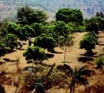 Wadi, the tree based farming model