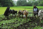 Livestock rearing and ecological agriculture