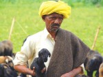 Pastoralists - like this Kuruba shepherd from India - know how to combine food production and care for the environment