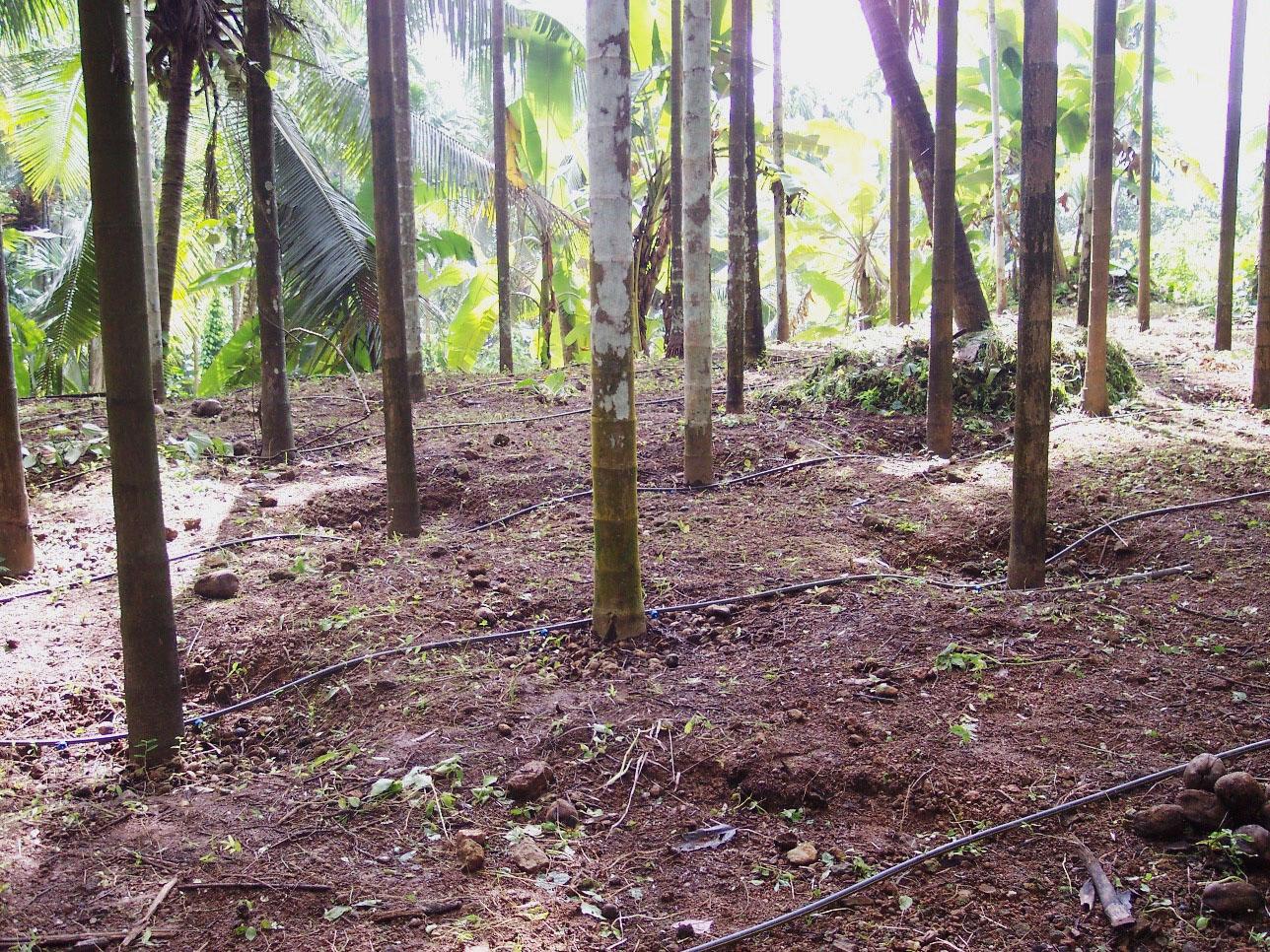 Irrigating root zones