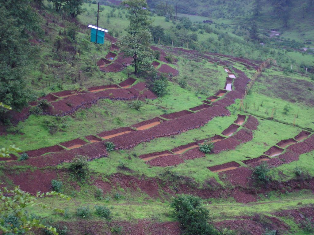 Rainwater impounded in contour trenches
