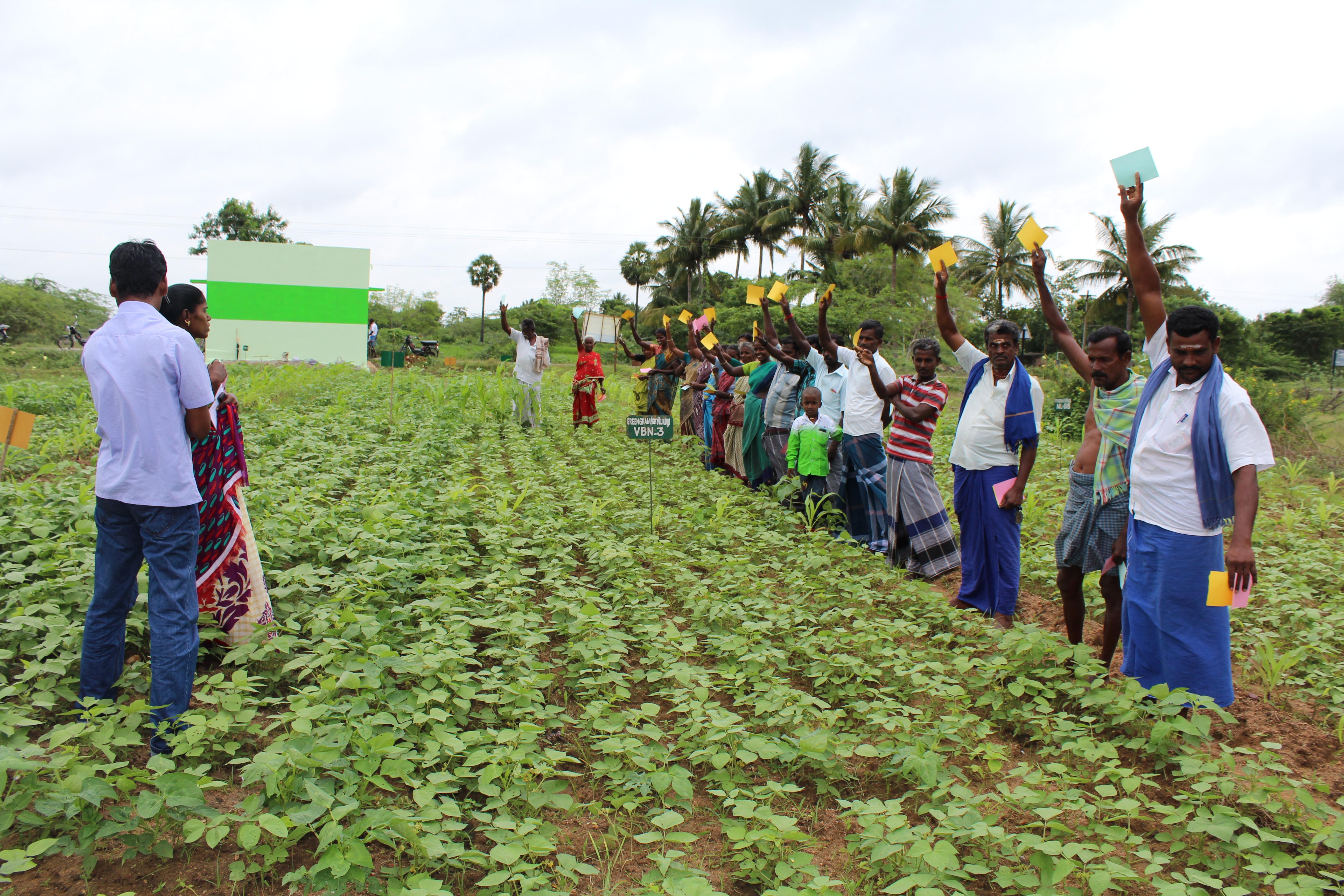 Farmers participating in Varietal Selection Trials