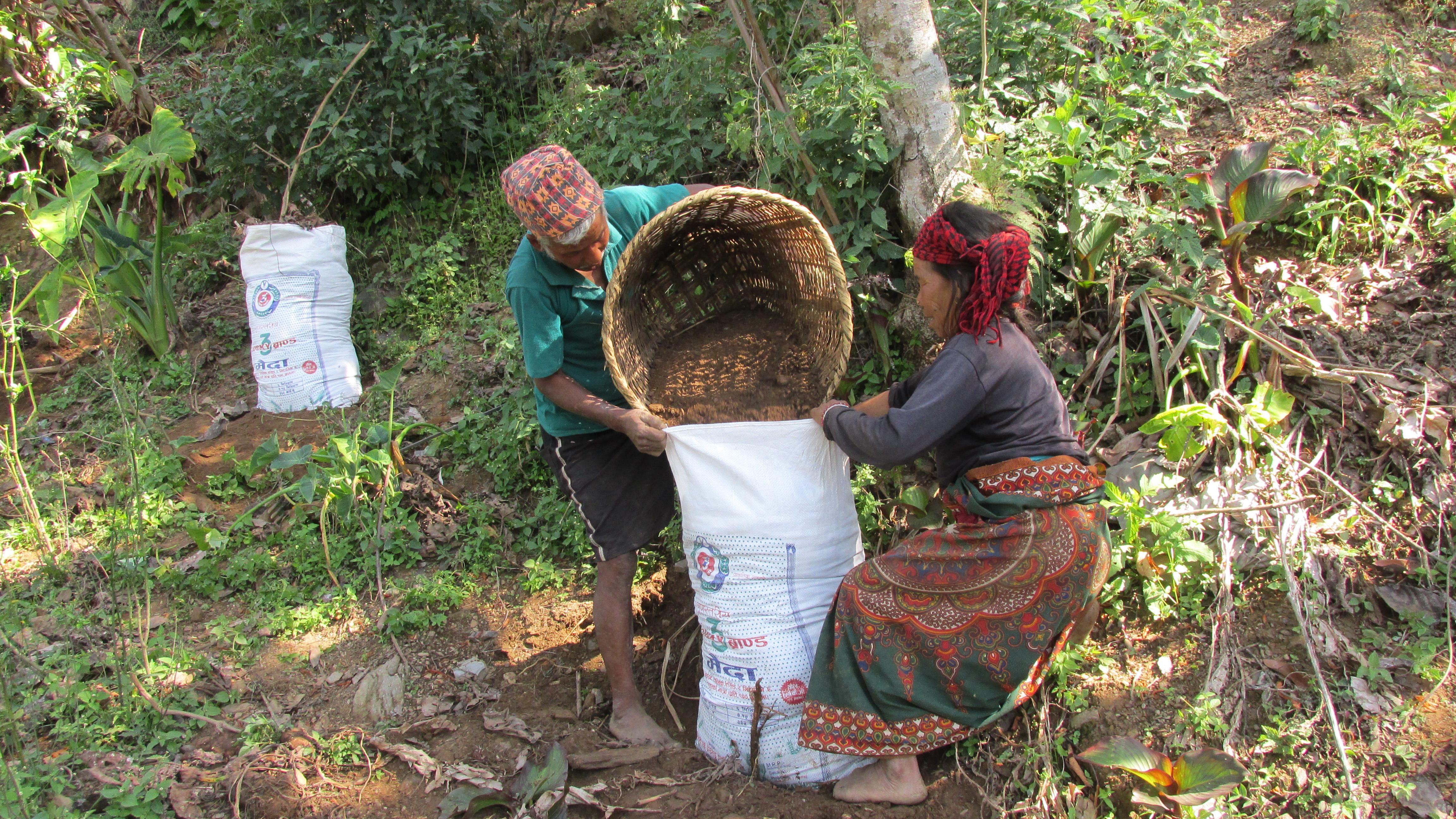 Preparation of sacks for transplanting yam