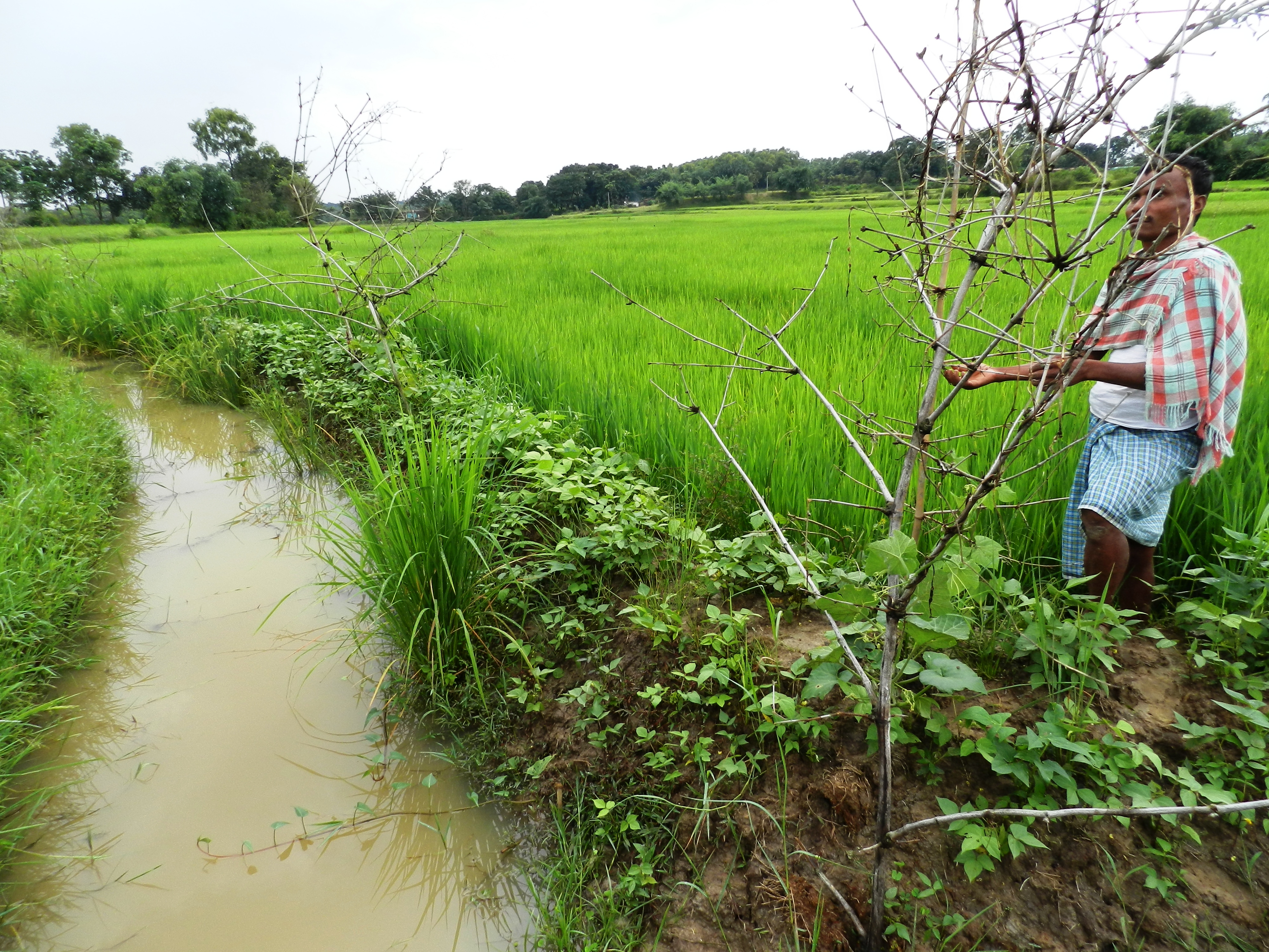 An integrated rice field near Ranchi
