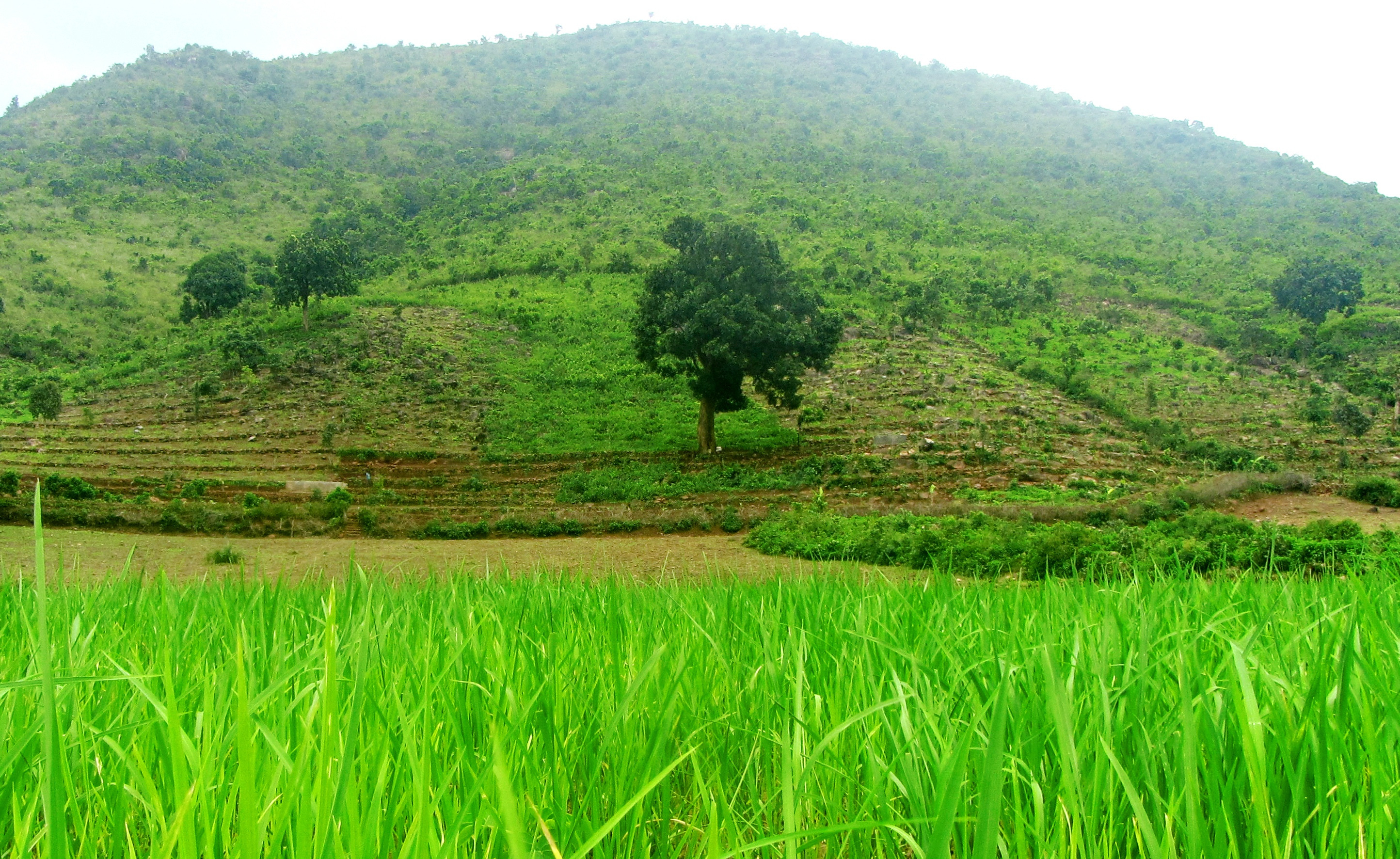 Integrated family farm development in 18 acres of Malegaon village