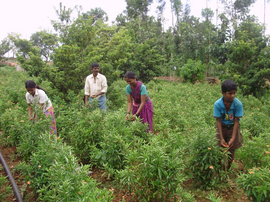 Its family farming with TBFS