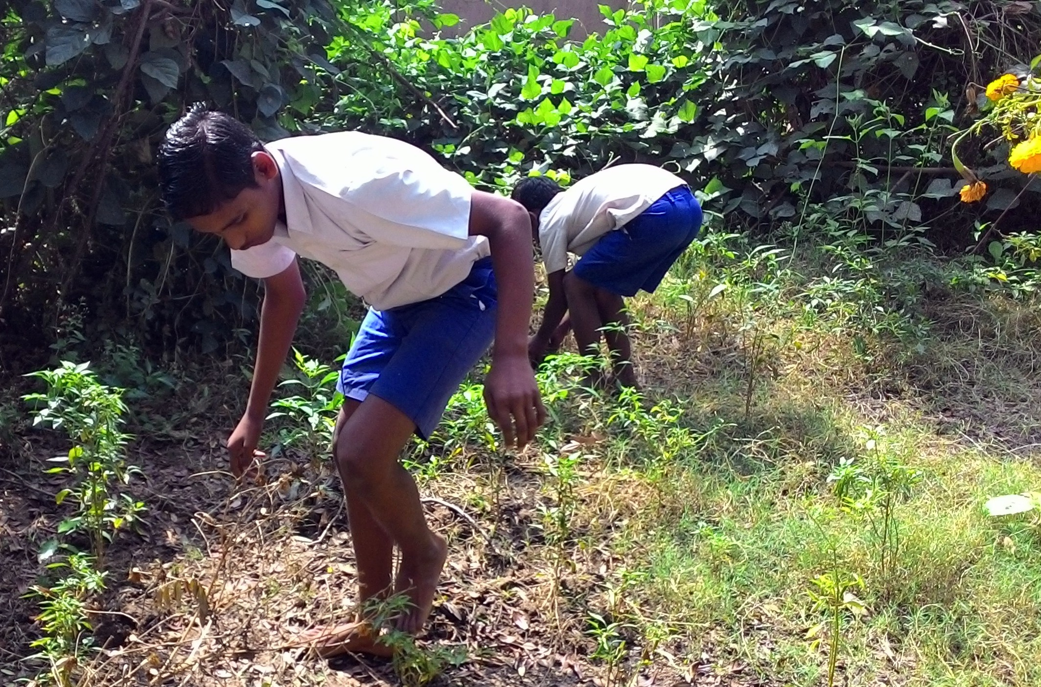 School students maintain kitchen gardens using ecofriendly methods