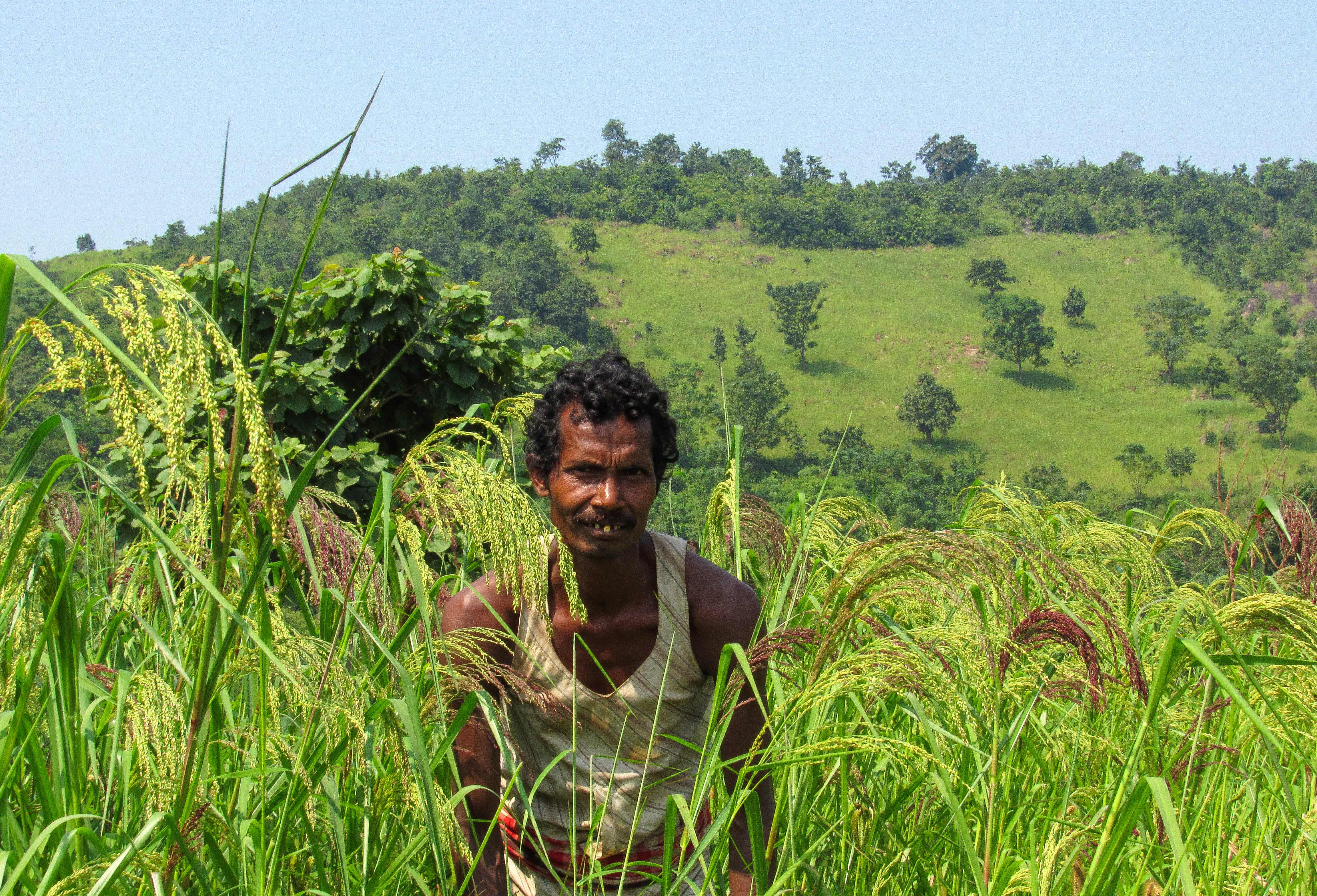 A mix of millets are cultivated on small farms