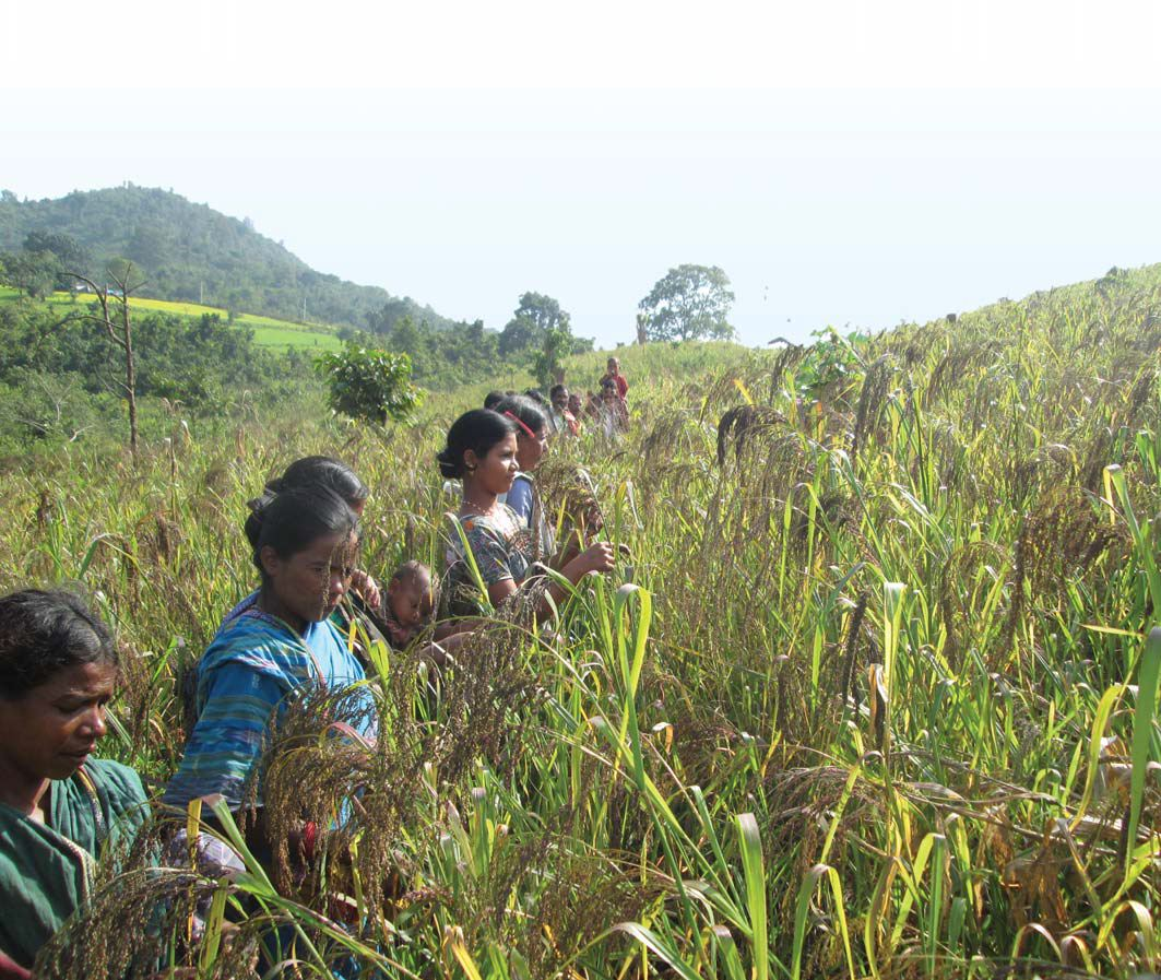 Kutia Kondh community has a rich knowledge of millets-based mixed farming systems