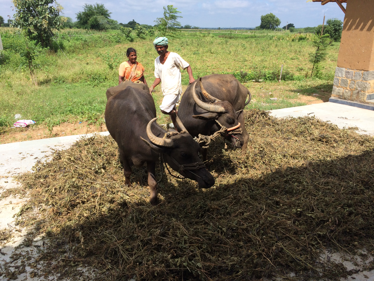 Livestock play a major role in farming in these households