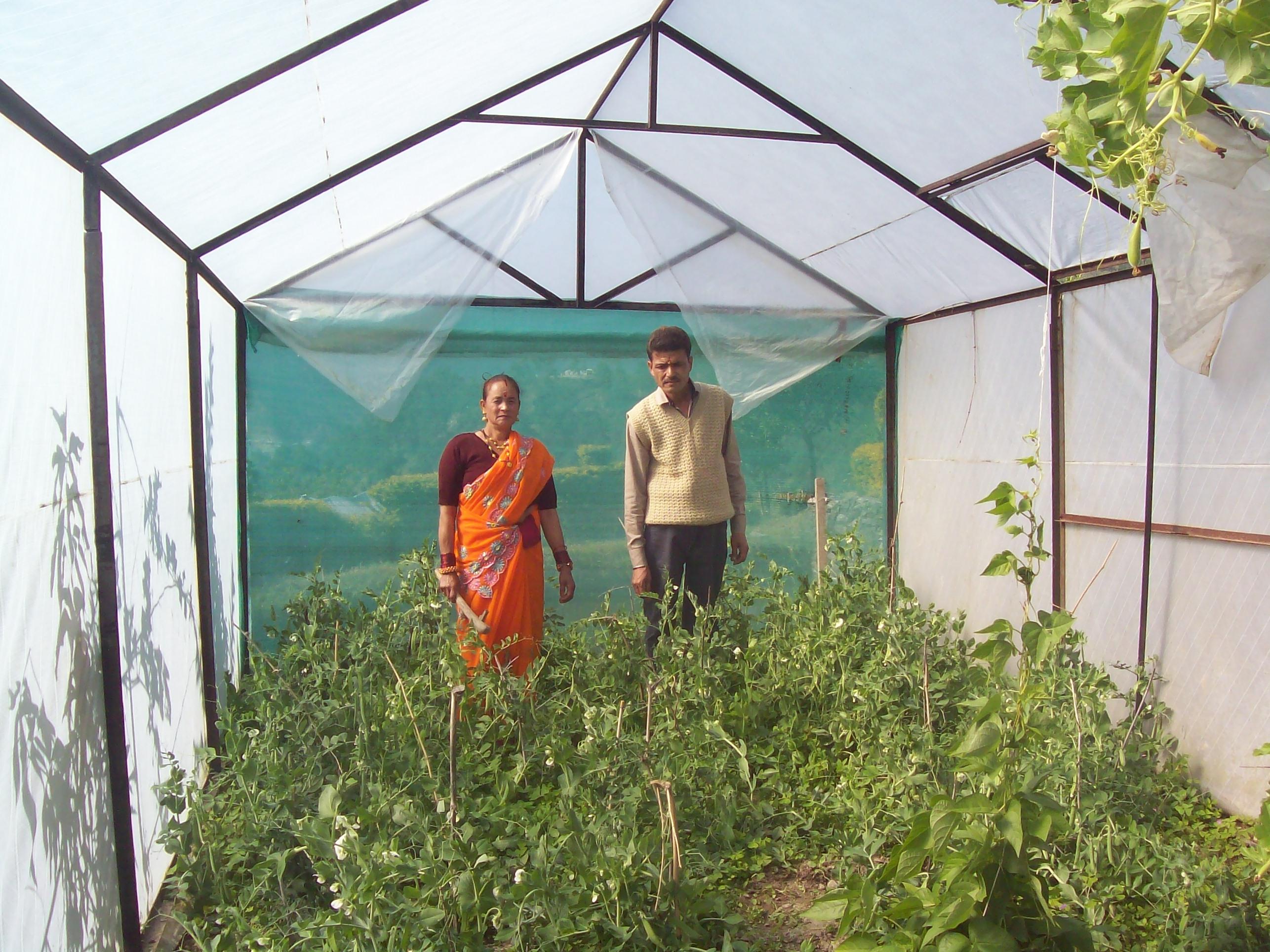 Organic vegetable farming by women - LEISA INDIA