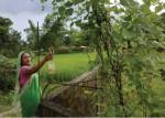 Alecha Begum spraying botanical pesticides to her plants