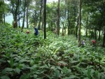 Agroforestry for ecological and economic benefits