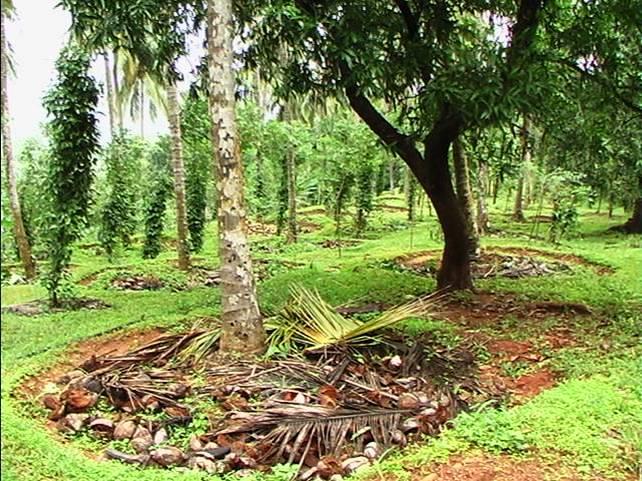 Kerala Home Gardens Nurturing Biodiversity Leisa India
