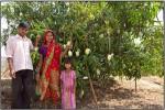 Trees for improving farm productivity
