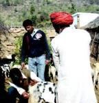 Eco-friendly goat husbandry