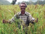 Reviving traditional millets through mixed cropping