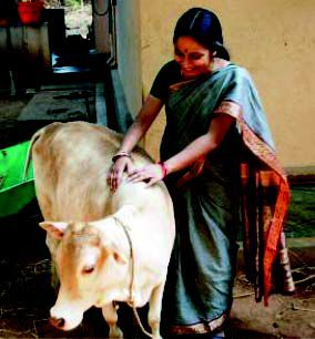 Women livestock keepers of South India prefer local to