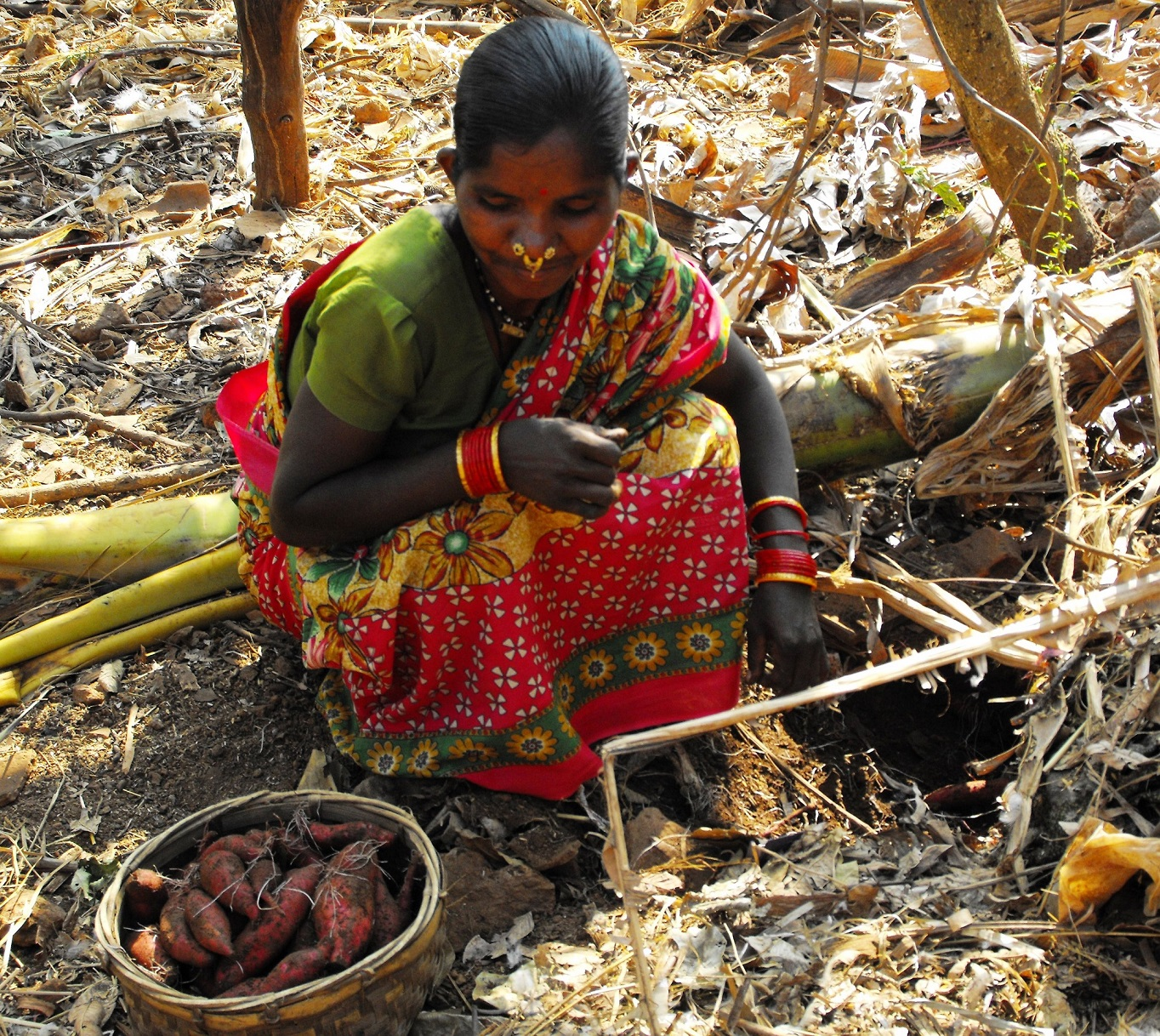 Shobini Muduli is delighted to harvest Sweet Potato