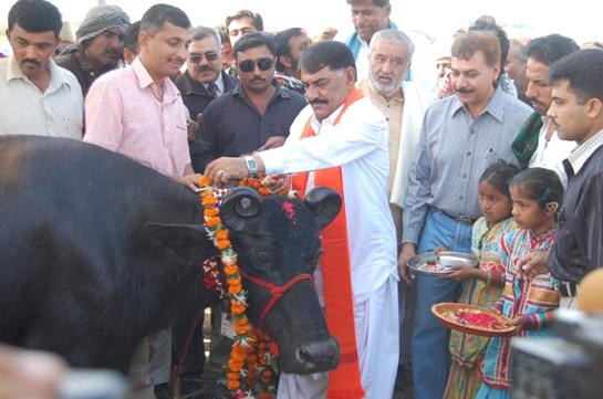 Banni buffalo is bred and developed by pastoralists in Banni over generations