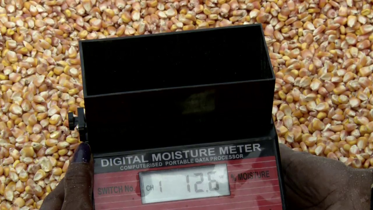 Digital moisture meters help PG members sell better quality maize