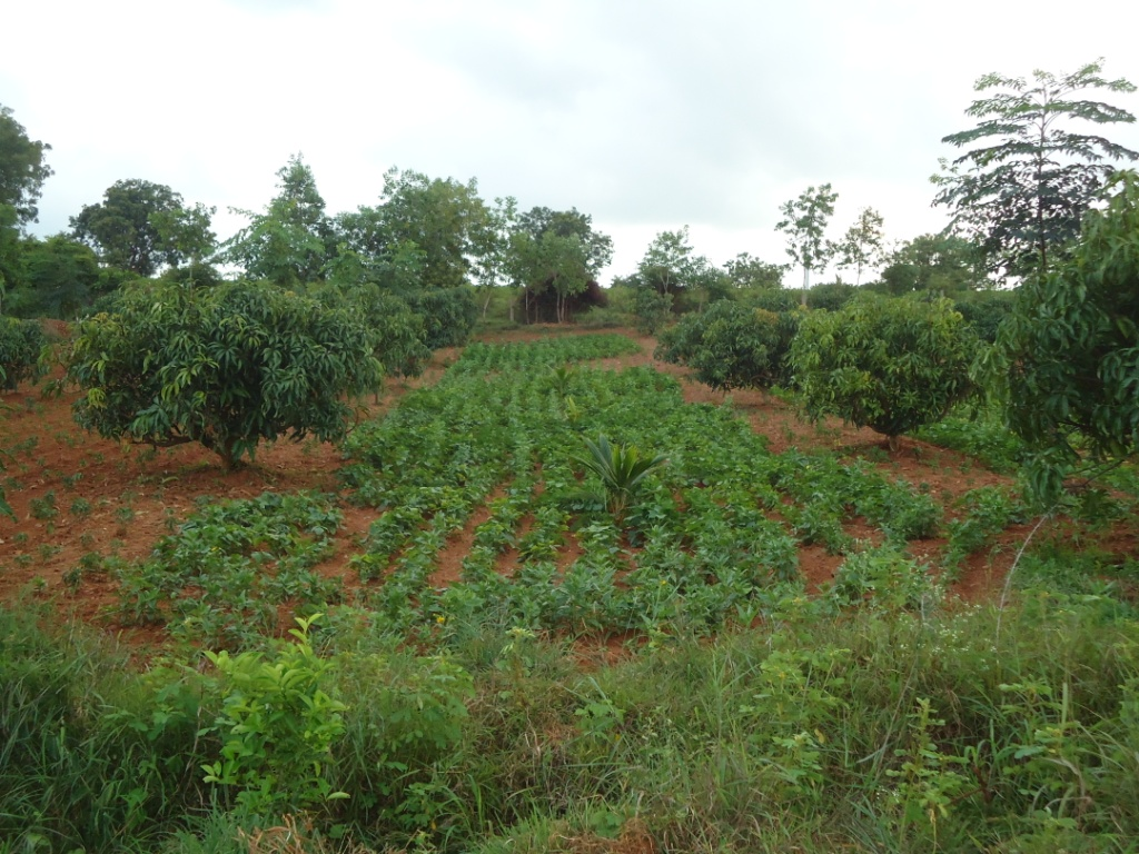 View of TBFS with trees crops and fodder