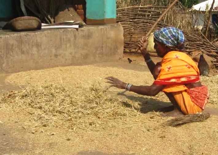 Many varieties of millets previously grown in the region are not cultivated