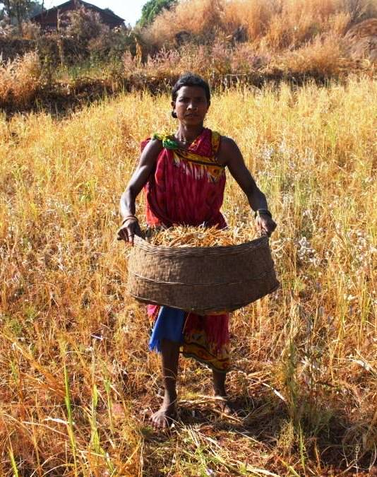 Millets are the main source of nutrition to the tribal communities